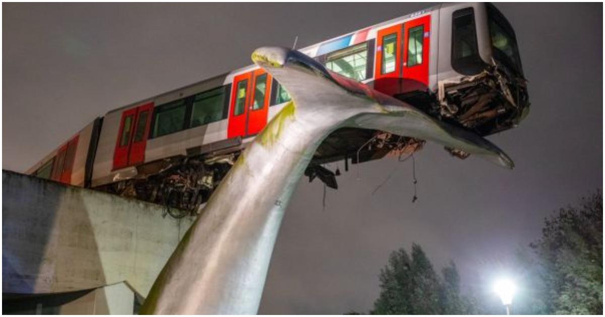Delfin farkán akadt fent a metró